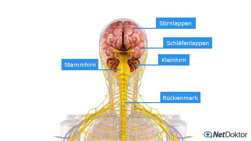 Kopfschmerzen: Formen, Ursachen, Medikamente, Selbstbehandlung ...