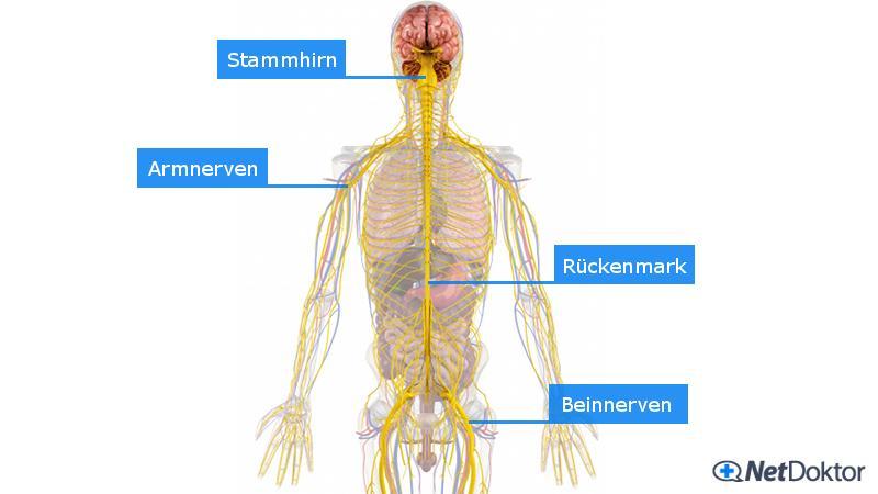 Kribbeln (Taubheitsgefühl): Ursachen, Behandlung - NetDoktor