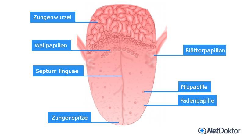 Mundgeruch (Halitosis): Ursachen, Tipps und Hilfe - NetDoktor