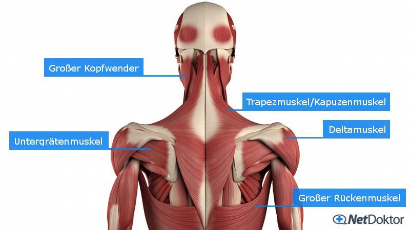 Nackenschmerzen: Ursachen, Risiken, Tipps, Übungen - NetDoktor