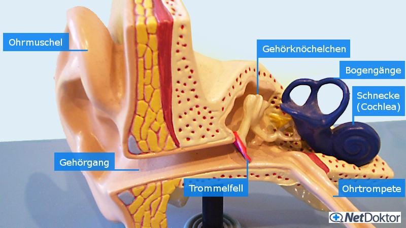 Ohrenschmerzen: Ursachen, Behandlung, Hausmittel - NetDoktor