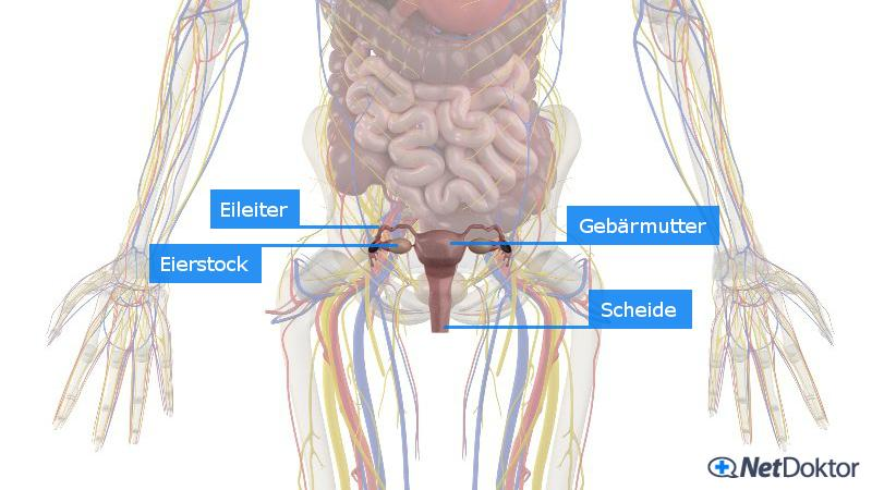 pille schmierblutung statt periode