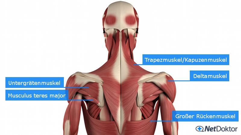 Schulterschmerzen: Ursachen, Diagnose, Behandlung, Tipps - NetDoktor